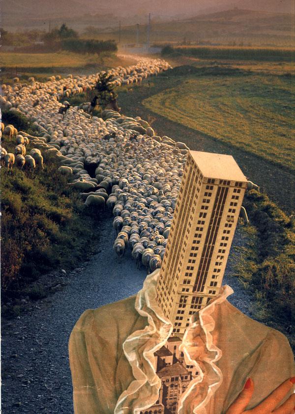 Following sheep