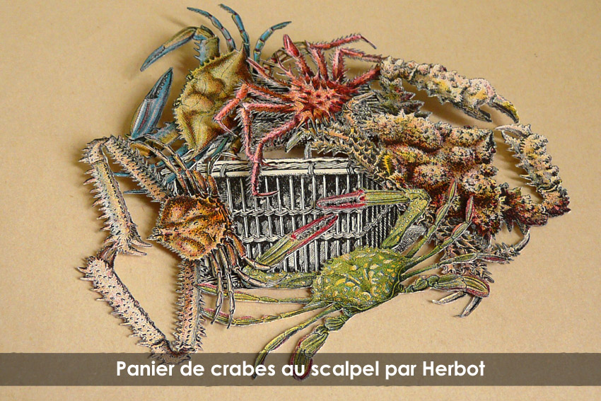 panier crabes1 » Avoir L Herbôt